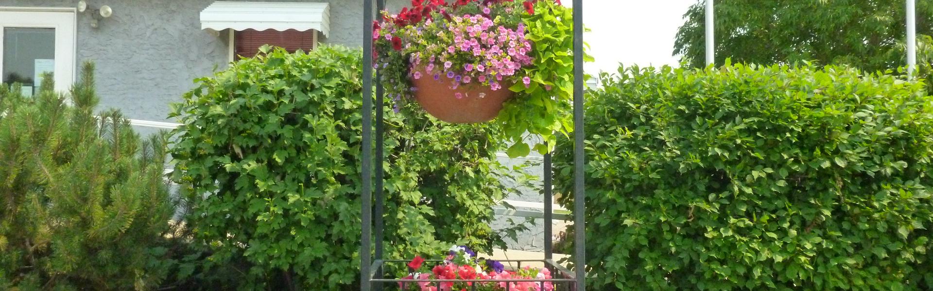 Plants-Slide